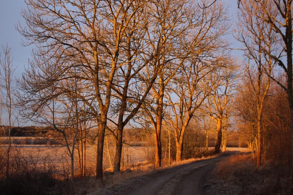 Vintermorgonallen
