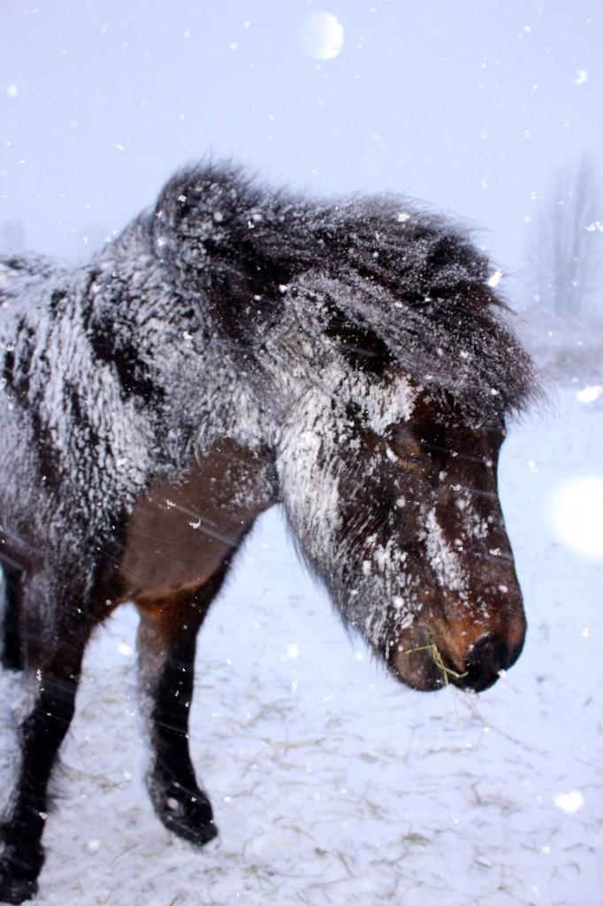 snöstormhelarimma