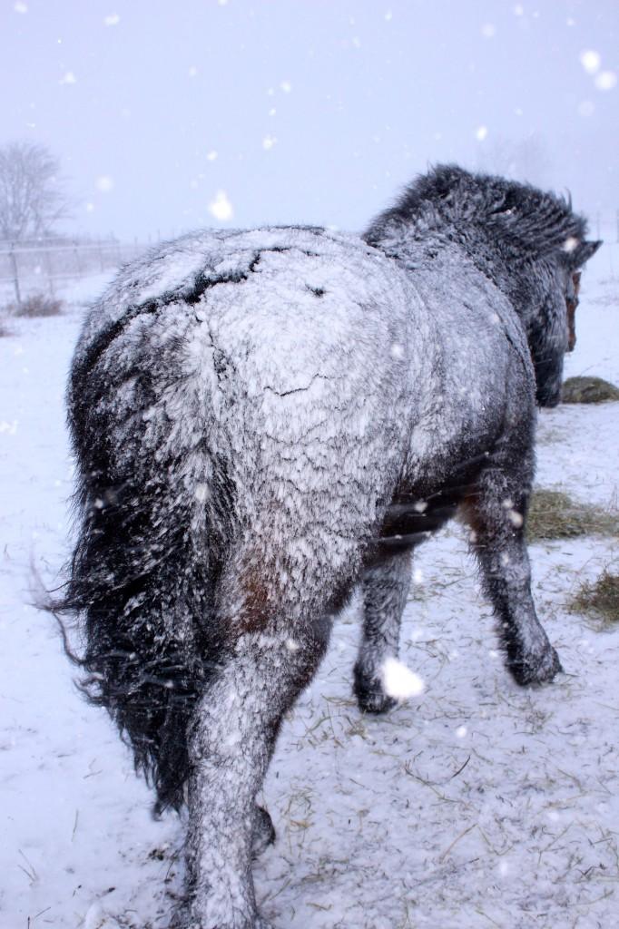 snöstormrimmabakifrån