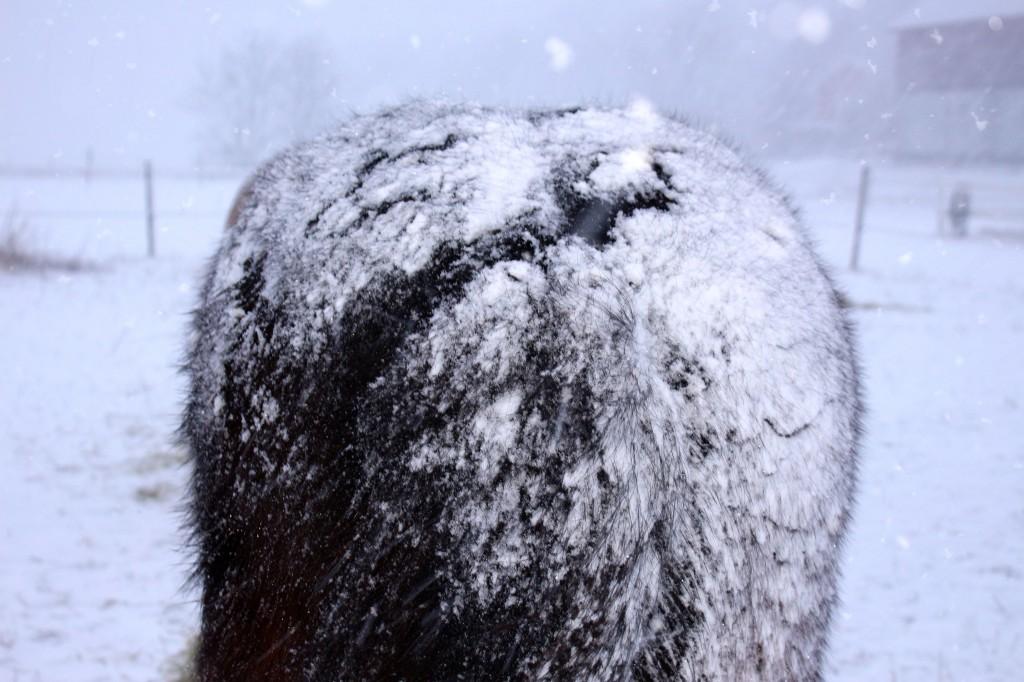 snöstormrumpa