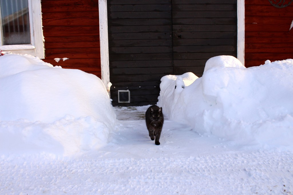 catwalkkatten